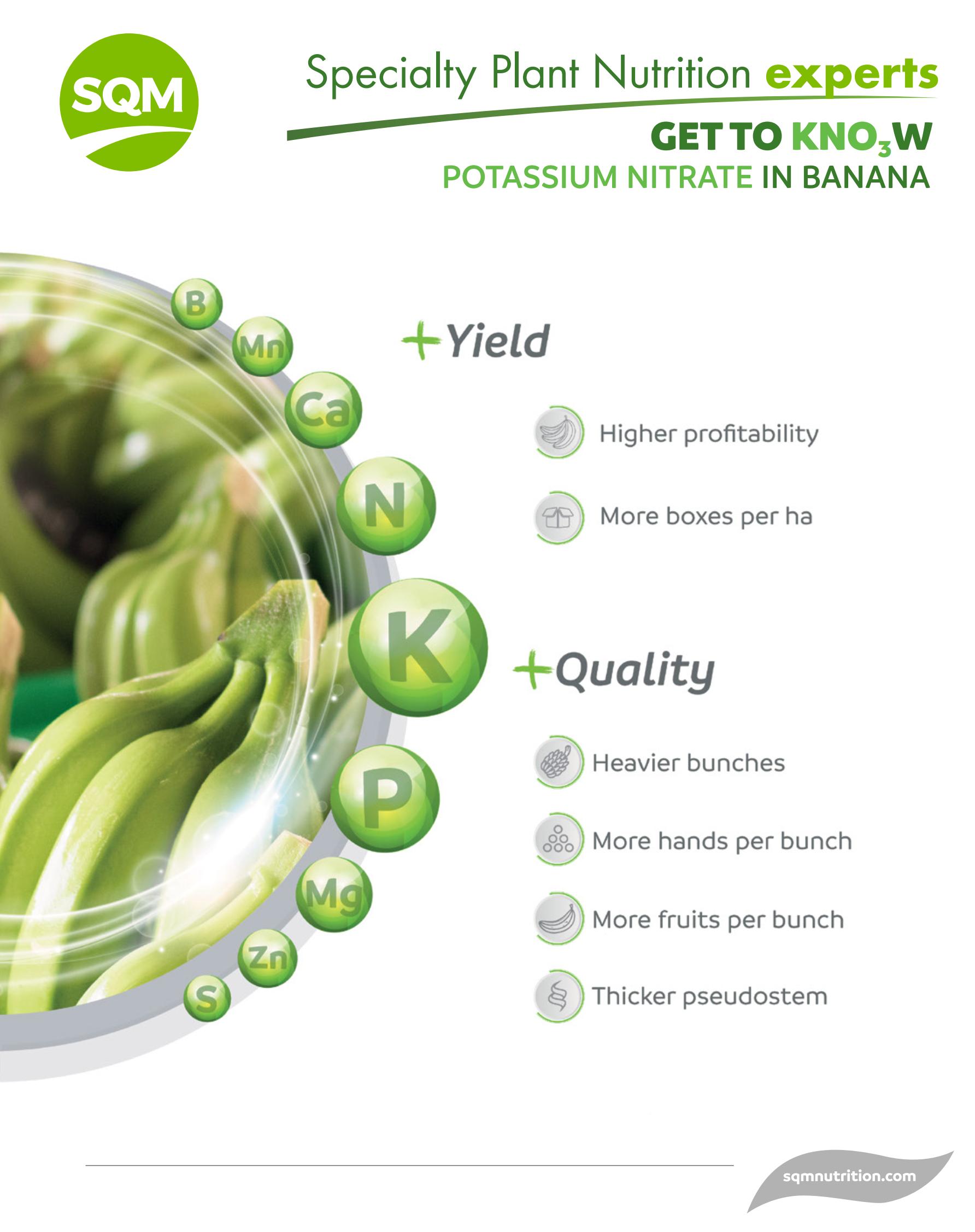 Banana Booklet