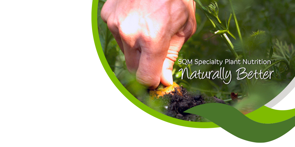 Specialty Plant Nutrition New Identity