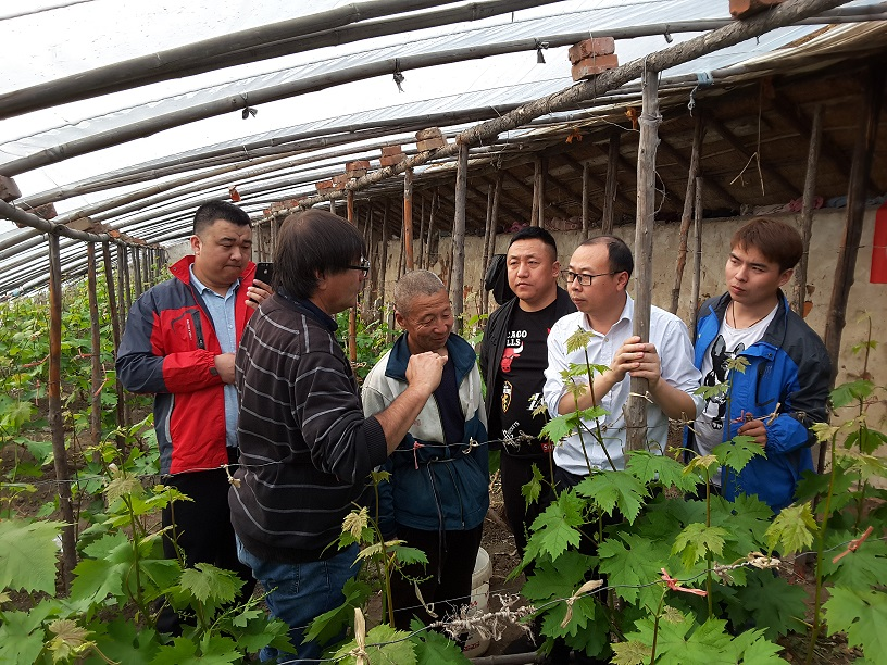 Meeting the world's largest producer of table grapes